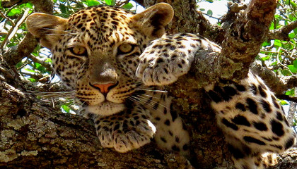 SUD AFRICA: TOUR ALLA SCOPERTA DEI BIG FIVE