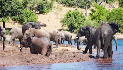 I Parchi di Botswana- Speciale Sposi