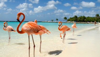 New York in love e Aruba – Speciale Sposi