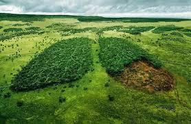 MINCA: Il polmone verde della Colombia