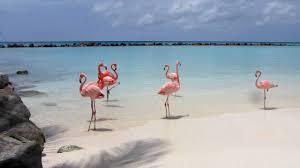 ARUBA: l'isola felice dei Caraibi
